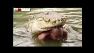 Человек оскорбил живого крокодила. Вот что вышло.