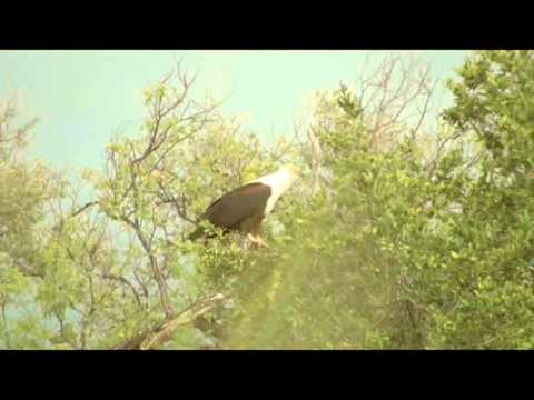 The Sound Of A Fish Eagle