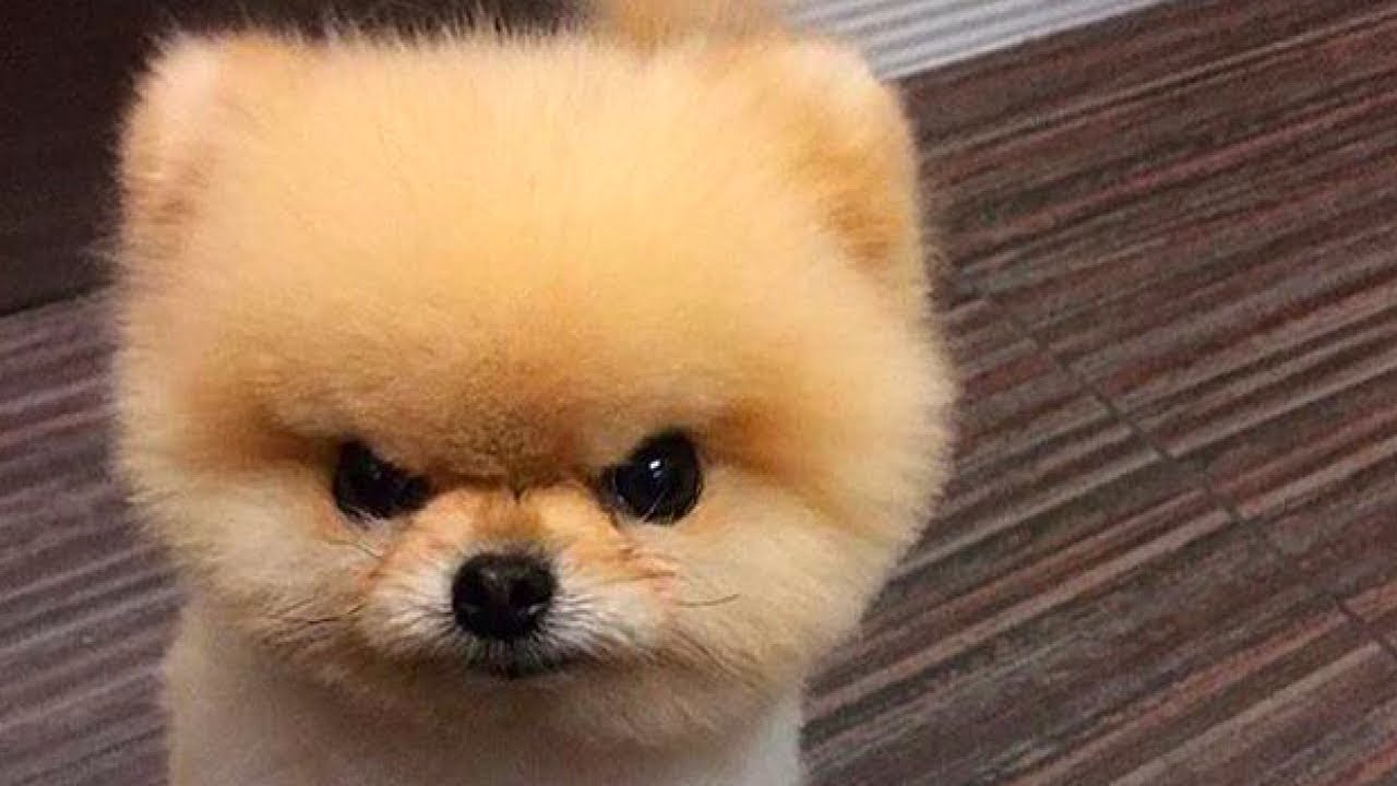 Angry Dogs Compilation - YouTube