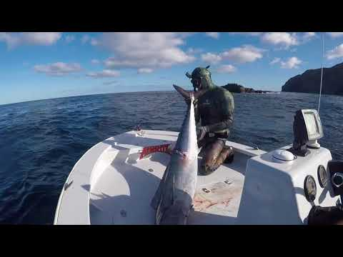 Spearfishing Norfolk Island 2017 - Aimrite Spearfishing