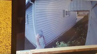 Crazy Neighbor!  Vandalizing in her nightgown caught by surveillance camera
