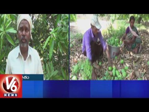 Sudden Rain With Strong Winds Hits Nagarkurnool   Rain Damages Kollapur Mangoes   V6 News