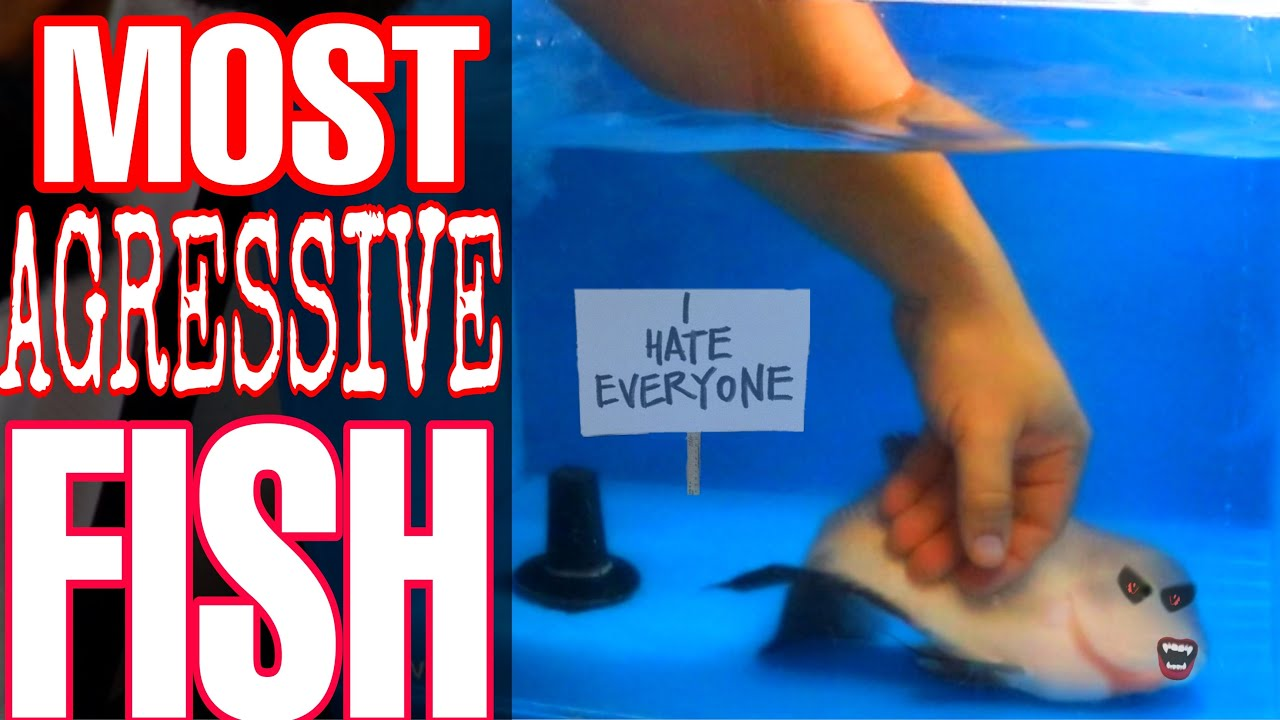 FEEDING OUR SHARK Full fish room TOUR *Everything* is on sale until Friday 10/23/20