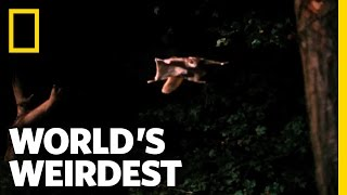 World's Weirdest - Flying Squirrel