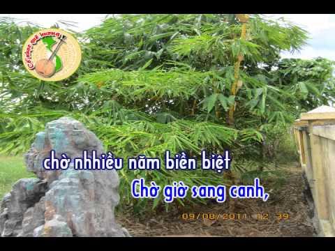 Karaoke: Phụng Hoàng 12 câu - Tình Mẹ Quê
