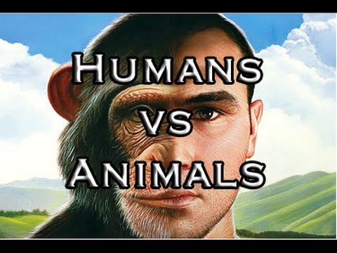 humans and animals difference Animals can and do communicate, but humans are the only species that use language what is it about our species that enables us to acquire.