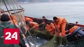 Норвегия не смогла найти замену российскому рыбному рынку - Россия 24