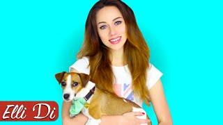 Трейлер канала Elli Di Собаки | ПОДПИШИСЬ! thumbnail