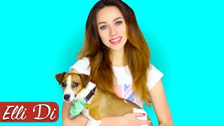 Трейлер канала Elli Di Собаки | ПОДПИШИСЬ!