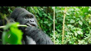 Gorilla Trekking in Rwanda   Four Seasons Private ...