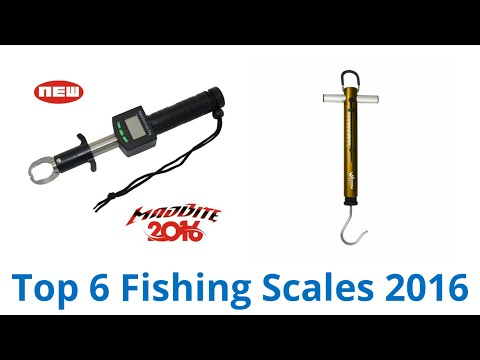 6 Best Fishing Scales 2016