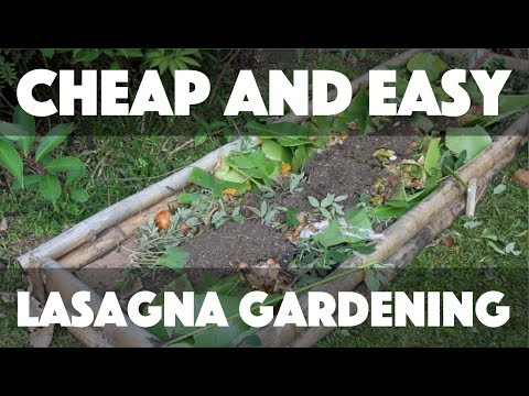 Cheap and Easy Lasagna Gardening