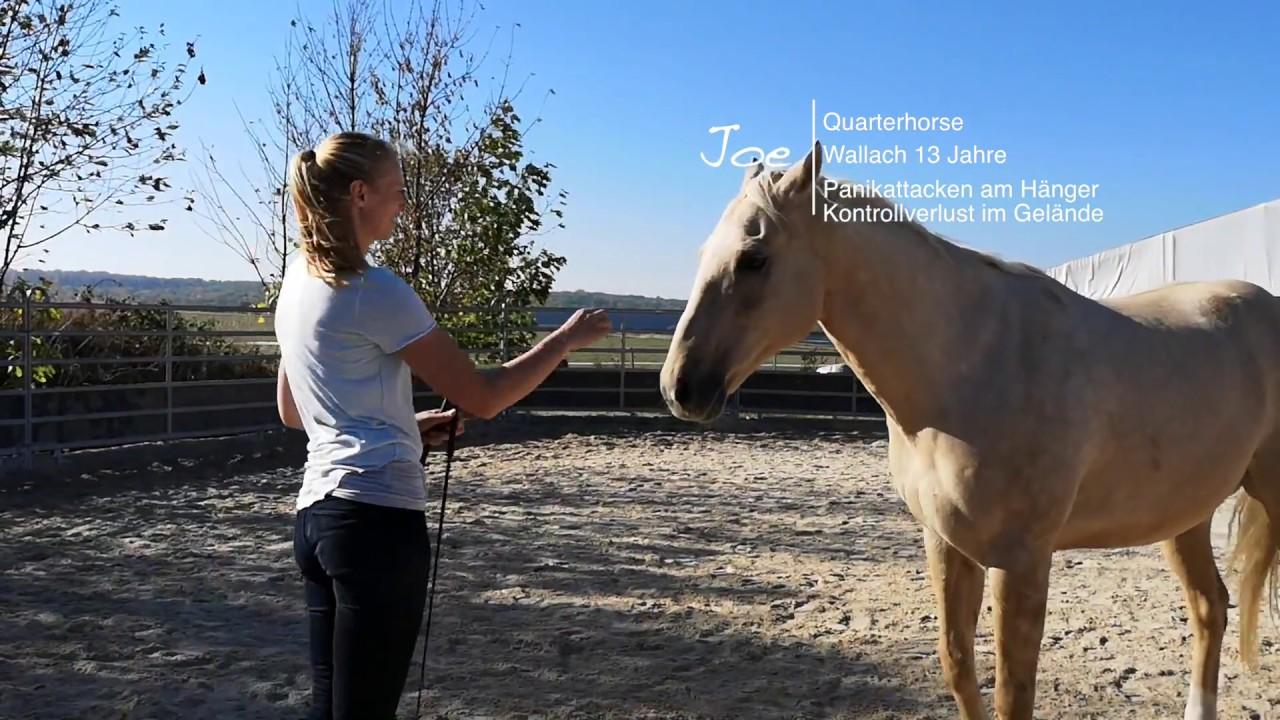 Joe - 5 Pferde 2 Wochen