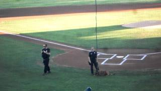 Fontana K9 Unit At The Inland Empire 66ers Game