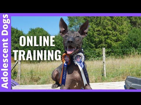 Online Dog Training Clinic Sneek Peek