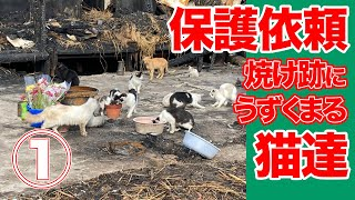 [Misery] A cat crouching in a burnt mark ... The owner died in a fire ① # 248