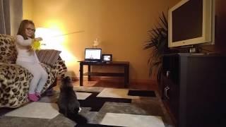 Девочка дрессирует сибирского котенка)Girl playing with Siberian kitten)