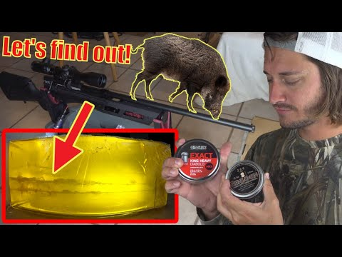 Can A Pellet Gun Kill A Hog? Let's Find Out!