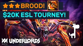 $20K ESL TOURNAMENT! ★★★ Broodmother Battle Fury Combo! #Sponsored