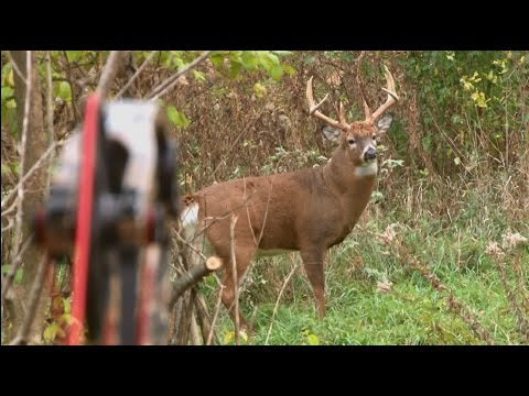 Bowhunting Deer: Boom or Bust 2015 Deer Hunt
