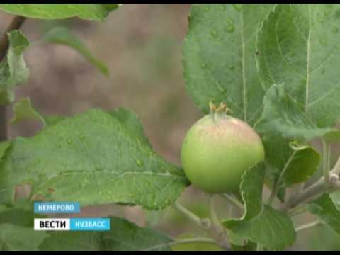 Яблони на ГТРК