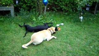 Danilo und Sambuco spielen mit dem Knuddel