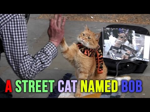 Me & My Pet Ft.  A Street Cat Named Bob & James Bowen... Exclusive Early, Rare Interview