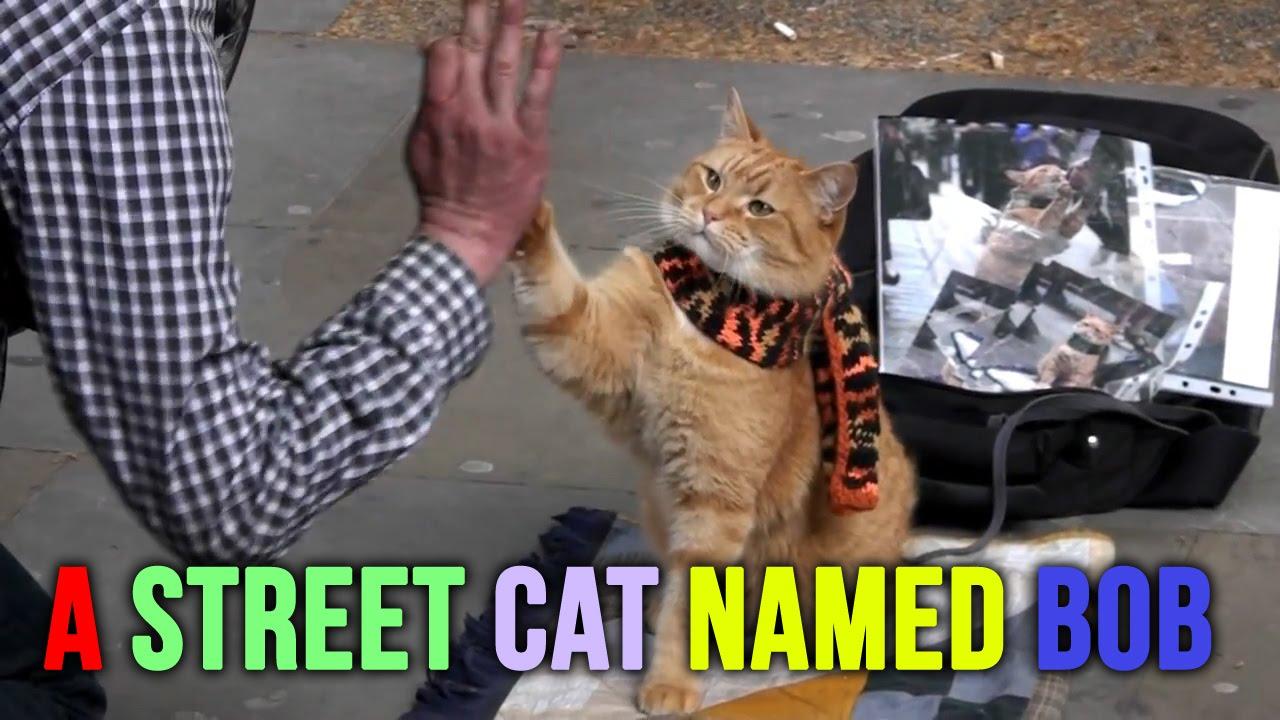 James Bowen Street Cat Bob Youtube