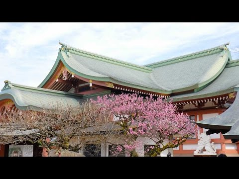 Hunting for Kyoto Cherry Blossoms | Vlog #45