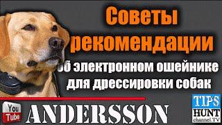 [Советы].....об электронном ошейнике для дрессировки собак.