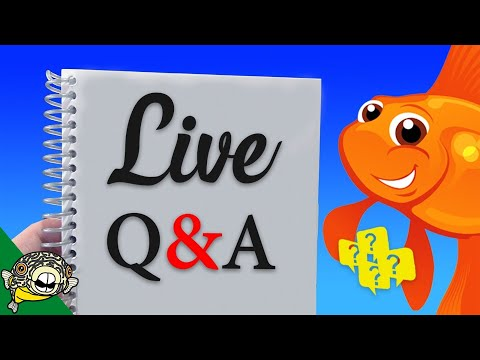 Bring your questions. Today I answer any Aquarium related Questions.