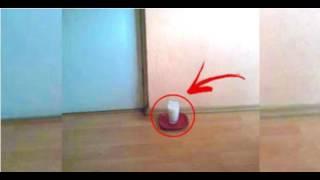 Вот что может произойти с квартирой, если поставить на пол стакан с солью и уксусом!