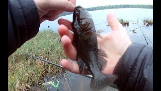 Жирные ротаны возле берега. Рыбалка с удочкой в мае!