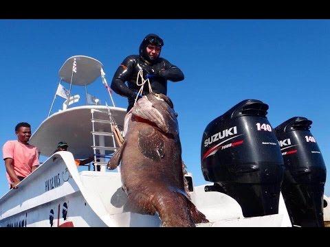 Гигантский Морской Окунь. Подводная Охота. Giant Goliath Grouper. Spearfishing