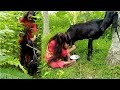 Feeding Jute Leaves & Milking- Eating Goat Milk by Stealing || Funny Village Video