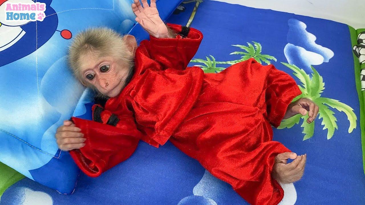 Monkey BiBi is cute when wear giant pajamas