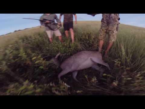 spearfishing-hunting new caledonia