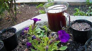 Demlenmiş Çayı Gübre Olarak Kullanmak ve Uygulama Şekli