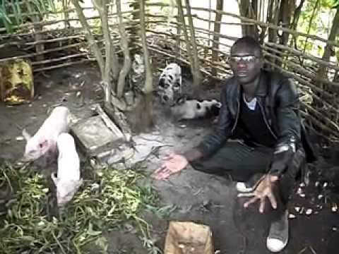 Wama-Uganda piggery farming - YouTube
