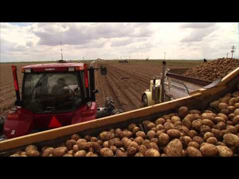 Potatoes - Along the Way: America's Heartland