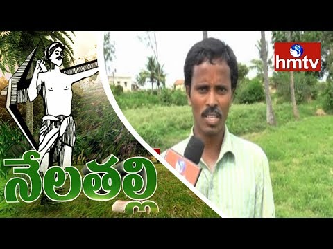 Chittoor District Villagers Success Story | Organic Greens Cultivation | Nela Talii | HMTV