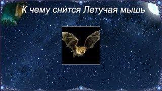 К чему снится Летучая мышь (Сонник)