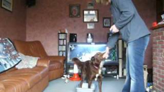 Body Awareness Exercise Ideas For Dogs