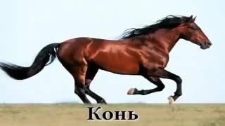 Бара бере (русская версия)