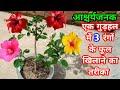 गुड़हल के एक पौधे में कई रंगों के फूल पाने का तरीका/how to multiple grafting on hibiscus plant