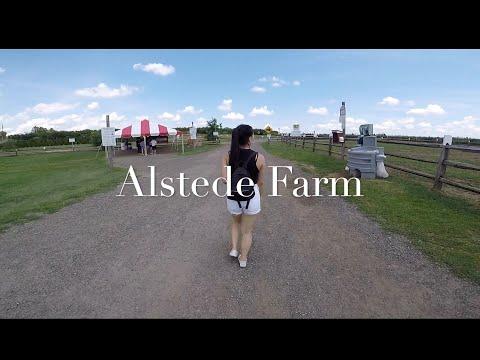 FRUIT PICKING & EXPLORING ALSTEDE FARM - NEW JERSEY   JULY VLOG