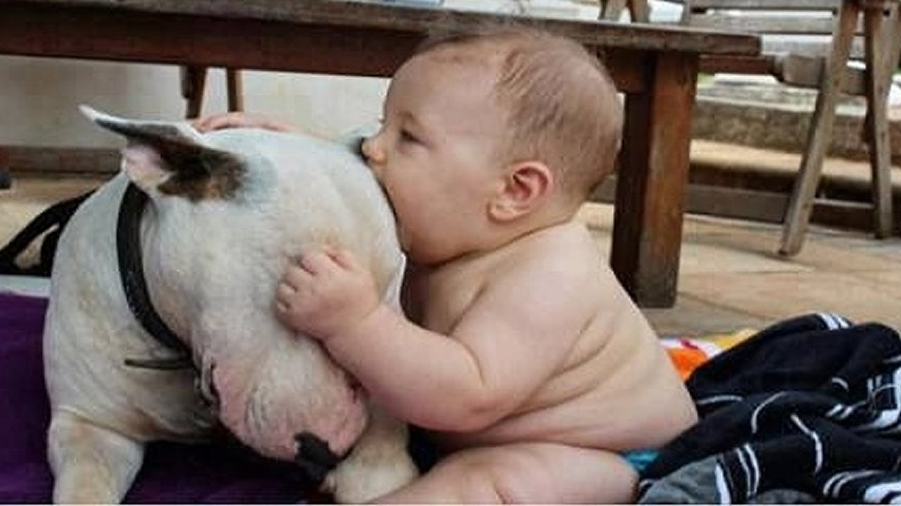 1209ee833 Cute Bull terrier Dogs and Adorable Babies - Funny Dog loves baby ...