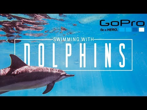 GoPro EPIC SWIMMING WITH DOLPHINS