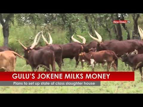 Gulu's Jokene milks money