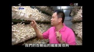 台中新社的香菇遠近馳名,種類也是全台之冠。不過一般人也許不曉得,在...